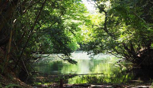 森林セラピーで癒される!うきは・篠栗・八女・豊前の4地域の特徴について解説
